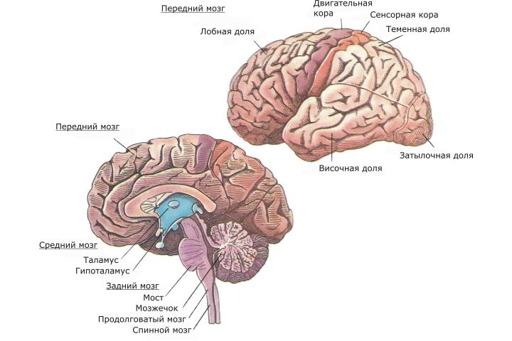 упражнения для мозга и памяти пожилого человека